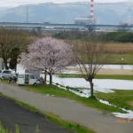 2020.4.2宇治川西京グラウンド冠水
